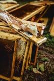 bin på bikuparamen royaltyfri fotografi
