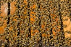 Bin på en bikupa Royaltyfria Foton