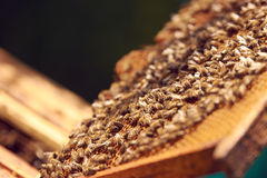 Bin på en honungskaka royaltyfria foton