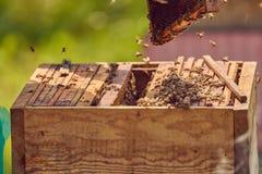 Bin på en honungskaka Arkivfoton