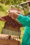 Bin på en honungskaka Arkivbilder