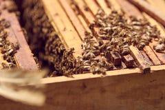 Bin på en honungskaka royaltyfri foto