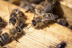 Bin på honeycells Royaltyfri Foto