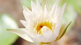bin p? lotusblomma