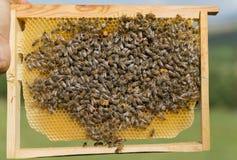 Bin producera naturlig honung och början av vårsäsongen royaltyfria bilder
