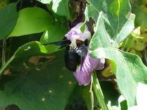 bin samlar blommanectar Royaltyfri Bild