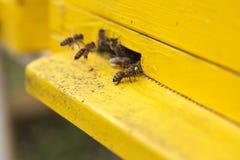 Bin som flyttar sig in i en bikupa Fotografering för Bildbyråer