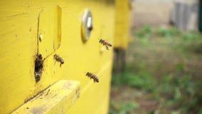 Bin som in och ut flyger bikupan lager videofilmer