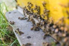 Bin som skriver in upp ett honungskakaslut arkivfoton
