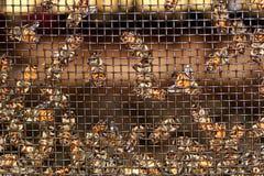bin som surrander Arkivbilder