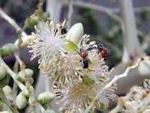 Bina röker nektar royaltyfria bilder
