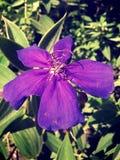 Binara blomma Arkivbilder