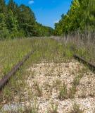 Binari ferroviari abbandonati nel legno Fotografia Stock