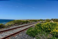 Binario ferroviario accanto alla spiaggia con il fiore Fotografie Stock