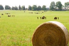Binary hay. Concept photo illustration of binary information stock photos