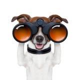 Binóculos que procuraram a vista observando o cão Fotos de Stock Royalty Free
