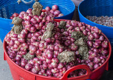 Bind of red onion. In basket Stock Image