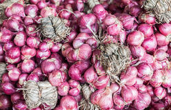 Bind of red onion. In market Royalty Free Stock Images