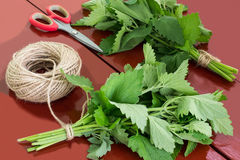 Binding of melissa officinalis in bundles. For drying. Harvesting medicinal plants. Used in herbal medicine and cooking. Melissa, scissors and twine on brown stock images