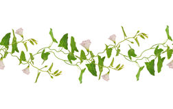 Bindweed άνευ ραφής σχέδιο κλαδάκι λουλουδιών και φύλλων Στοκ Φωτογραφία
