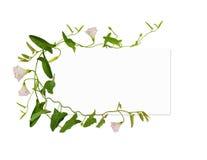 Bindweed λουλούδι και φύλλα και μια κάρτα Στοκ Εικόνες
