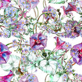 Bindweed, blue flower, watercolor, pattern seamless Royalty Free Stock Images