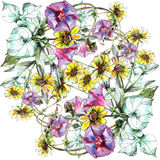 Bindweed, chamomile flower bouquet, watercolor, pattern Royalty Free Stock Images