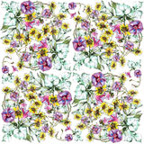 Bindweed, chamomile flower bouquet, watercolor, pattern Stock Images