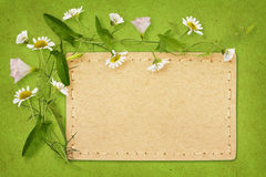 Bindweed and daisy flowers with card Royalty Free Stock Images