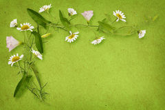 Bindweed and daisy flowers with card Royalty Free Stock Image