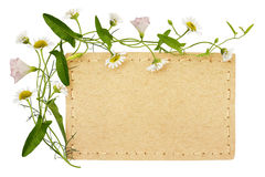 Bindweed and daisy flowers with card Stock Image