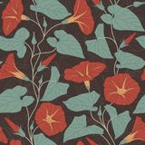 Bindweed. On a dark background in seamless pattern Royalty Free Stock Photography