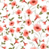 Bindweed , floral background, seamless pattern. Vector illustration Stock Photos