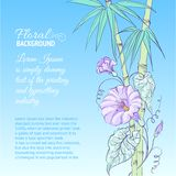 Bindweed flower and bamboo. Bindweed flower and bamboo on blue background. Vector illustration Stock Photos