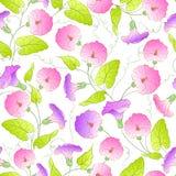 Bindweed flower seamless pattern. Vector illustration Royalty Free Stock Photo