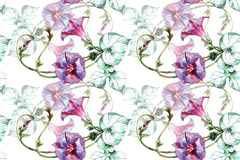 Bindweed flower, watercolor, pattern seamless Stock Photography