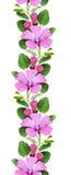 Bindweed flowers seamless pattern. On white Stock Photo