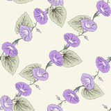 Bindweed seamless pattern Stock Photo
