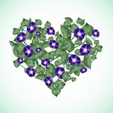 Bindweed in a shape of heart. Bindweed in a shape of a heart Stock Photography