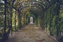Bindweed trellis in gardens Royalty Free Stock Images