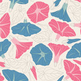 Bindweed. On a white background in seamless pattern Royalty Free Stock Image