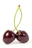 Bing Cherries. Two bing cherries isolated against a white background Royalty Free Stock Photography