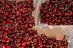 Bing cherries. Bins of Red Bing Cherries at farmer`s market Stock Photography