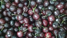 Bing Cherries pronto para a torta Imagens de Stock Royalty Free