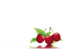 Bing cherry Royalty Free Stock Images