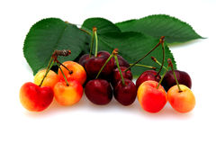 Bing And Rainier Cherries. Fresh picked bing and rainier cherries on a white background with cherry leaves Stock Images