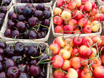 Bing and Rainier cherries Stock Images
