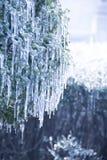 BingGua,ice Stock Image