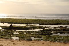 Binginstrand, Bali, Indonesië royalty-vrije stock afbeeldingen