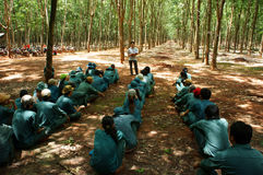 Worker meeting at rubber plantation. BINH PHUOC, VIET NAM- MAY 9. Dong Phu plantations rubber worker meeting with team leader to report their work .  Binh Phuoc Royalty Free Stock Image